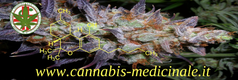 www.cannabis-medicinale.it