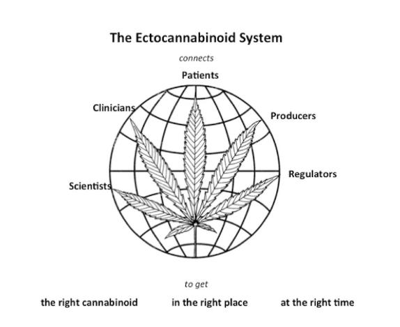 The Ectocannabinoid System